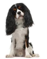 hondennamen reu 2